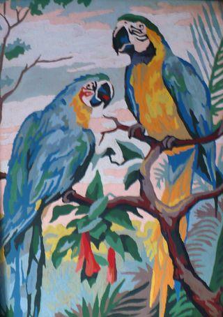 Pbn birds