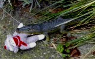 Smonkeyinaligatormouth