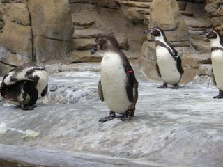 Zoo trip 008