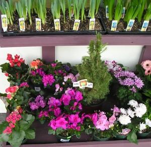 C_flower_shop